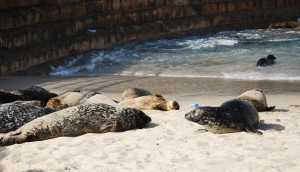 La Jolla Seals and Trash