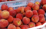 2011 La Jolla Open Aire Market Peaches
