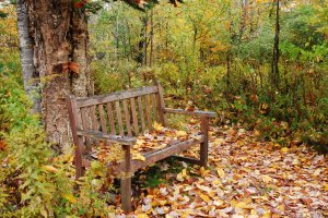 Robert Frost bench with leaves